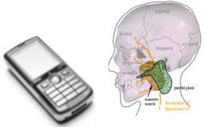 تاثیر تقویت کننده آنتن موبایل برای سلامتی انسان